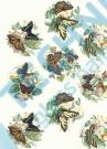JM 707782 Butterflies